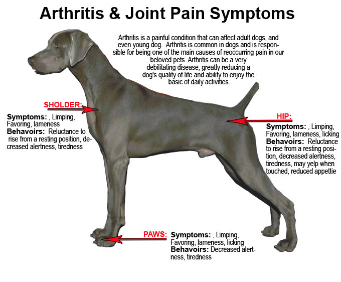treatment of arthritis in dogs
