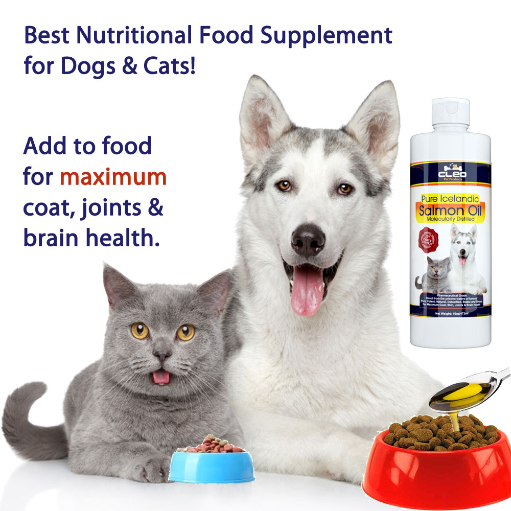 best nutritional supplements for dogs and cats